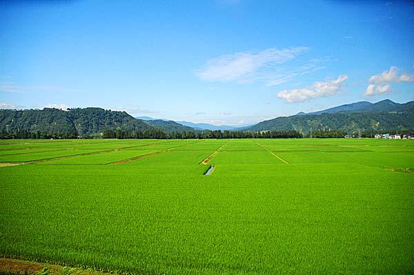 特別栽培米(減農薬・有機質肥料)魚沼産コシヒカリ