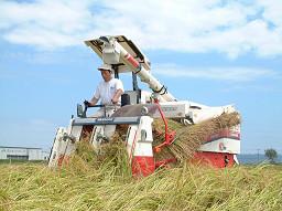 特別栽培米(減農薬)新潟ライフ農法 佐藤さんのコシヒカリ