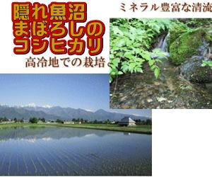 特別栽培米(減農薬)飯山みゆきコシヒカリ